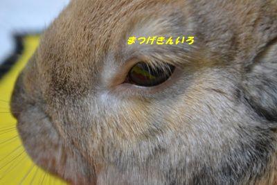 053_20120114194213.jpg