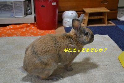 060_20120224135636.jpg