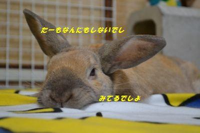 070_20120220111305.jpg
