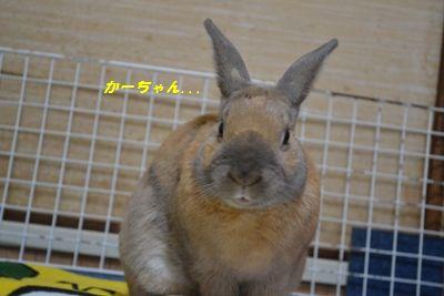 089_20120220111045.jpg