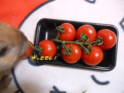 DSCN0105_20120317104538.jpg