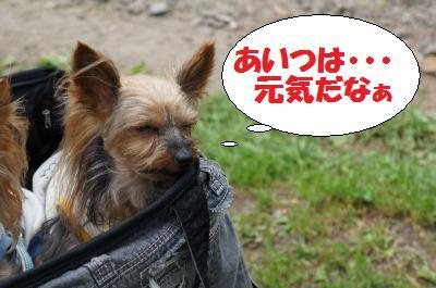 s_DSC00868.jpg