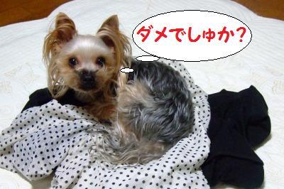 s_DSCF0403.jpg