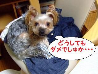 s_DSCF0405.jpg