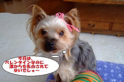 s_DSCF0600.jpg