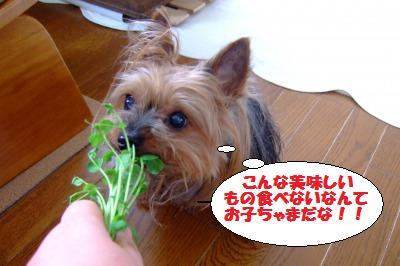 s_DSCF0771.jpg