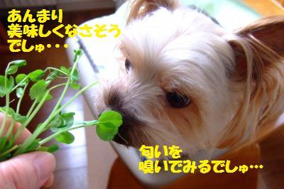 s_DSCF0772.jpg