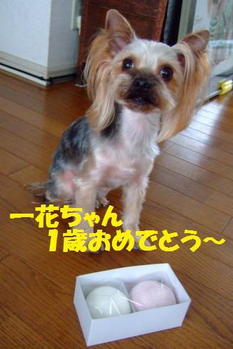 s_DSCF1081.jpg