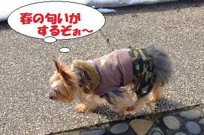 s_DSCF1375.jpg