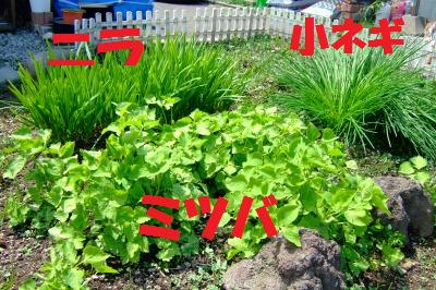 s_DSCF1669.jpg