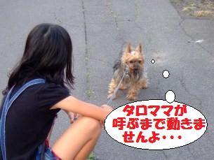 s_DSCF1941.jpg