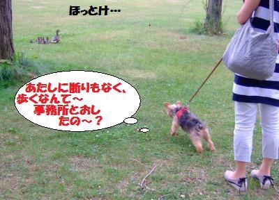 s_DSCF2093.jpg
