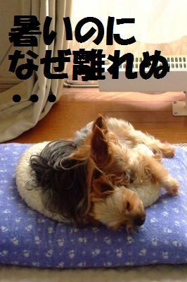 s_DSCF2316.jpg