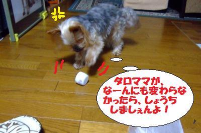 s_DSCF2584.jpg