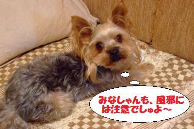 s_DSCF2600.jpg
