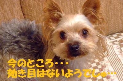 s_DSCF2602.jpg