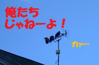 s_DSCF2737.jpg