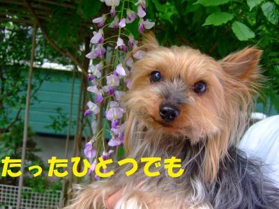 s_DSCF8969.jpg