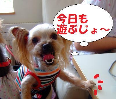 s_DSCF9229.jpg