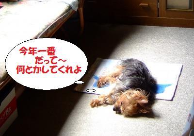 s_DSCF9330.jpg