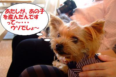 s_DSCF9676.jpg