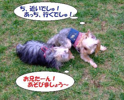 s_DSCF9706.jpg