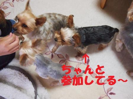 s_PA200807.jpg