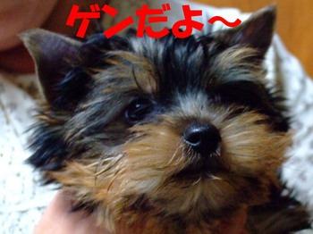 s_photo_87.jpg