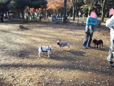 2011121112.jpg