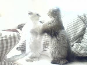 白クマ対パンダ