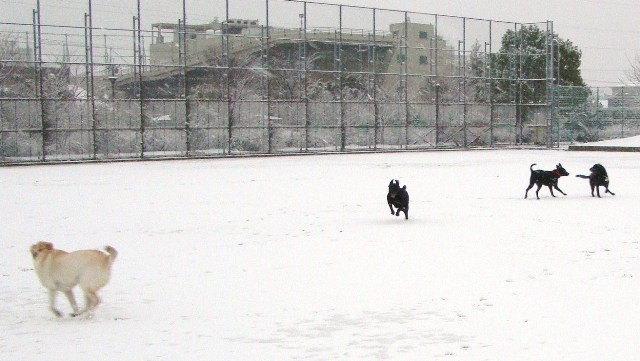 20110211雪 (18)