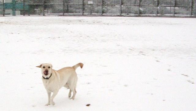 20110211雪 (16)