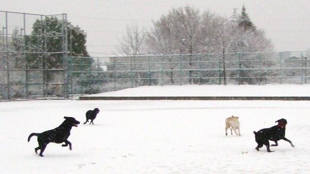 20110211雪 (17)