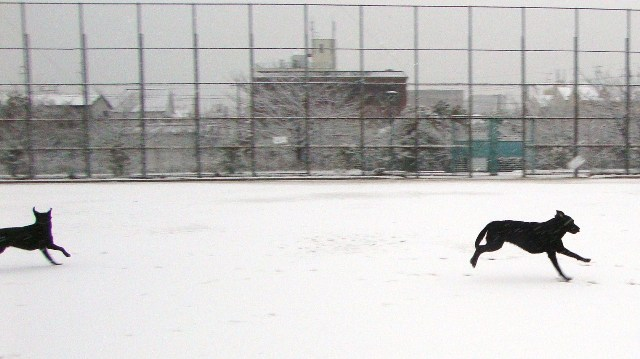 20110211雪 (15)