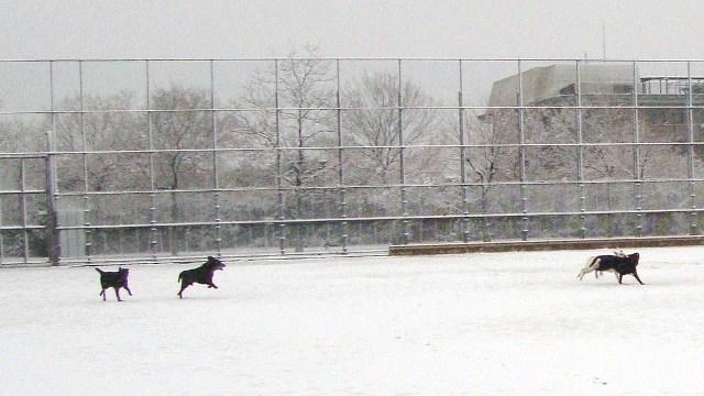 20110211雪 (14)
