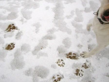 20110211雪 (10)