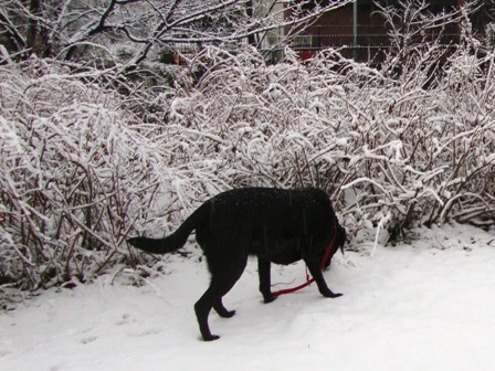 20110211雪 (2)