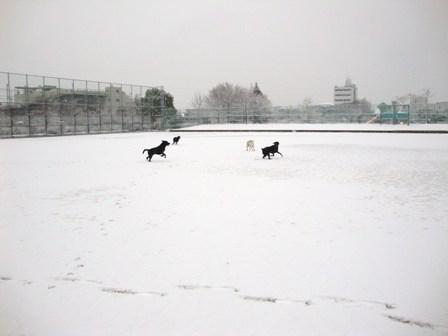 20110211雪 (7)