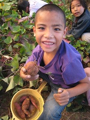 サツマイモの収穫4