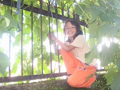 瓜の収穫2