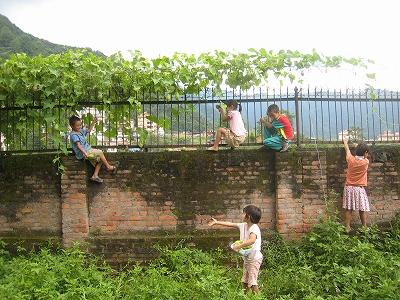 瓜の収穫3