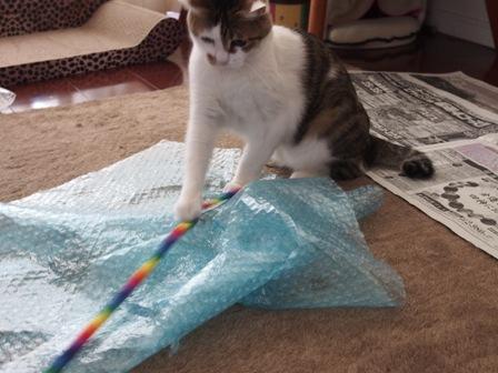 きゃっ きゃっ  と遊ぶ猫。