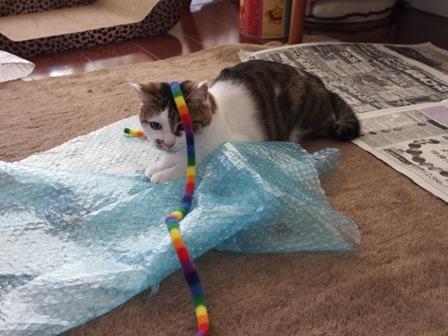 出ばなをくじかれた猫