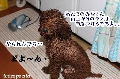 IMG_6082.jpg