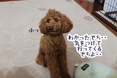 IMG_6248.jpg