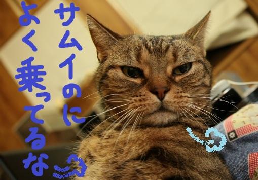 (1)_20110130063705.jpg