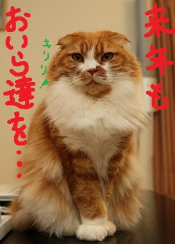 (10)_20101231190738.jpg