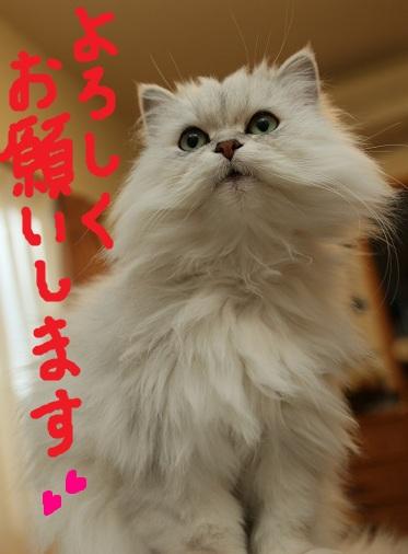(11)_20101231190738.jpg
