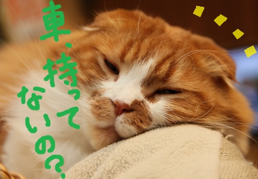 (2)_20110130063705.jpg