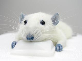 blue_rats.jpg